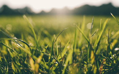 What's the Best Time to Fertilize Your Lawn: Before or After Rain?