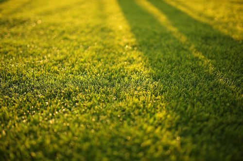 can you overseed your lawn